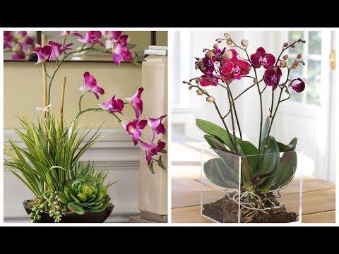 КАКОЕ ОКНО ВЫБРАТЬ ДЛЯ ОРХИДЕИ ? ОСВЕЩЕНИЕ ОРХИДЕИ #51 #oldenburgru #phalenopsis #orchids