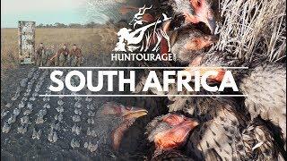 amazing bird hunting safari in south africa 4k video صيد الطيور البرية في جنوب أفريقيا