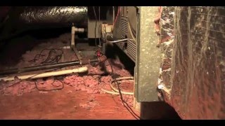 Rats and Rodent Damage  Attic and Insulation NJ 732-309-4209