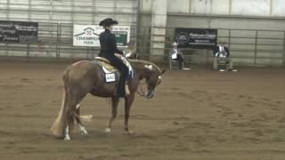 Ellie Becker Horsemanship show video 7