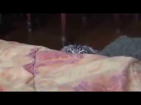 Mon chat est chelou depuis qu'il a vu Saw