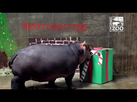 Fiona's First Christmas - Cincinnati Zoo