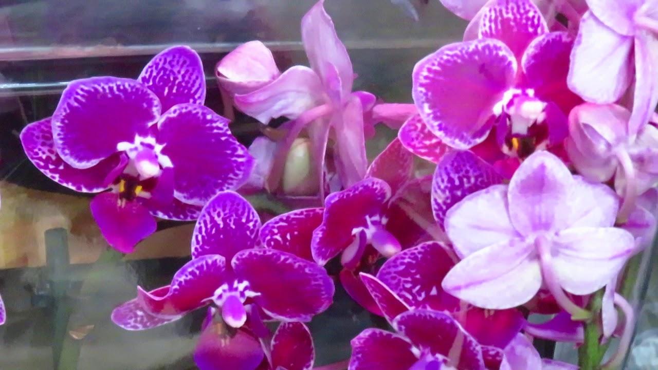 Новый завоз орхидей от13.07.2020г.