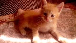 Рыжий котенок ищет хозяина