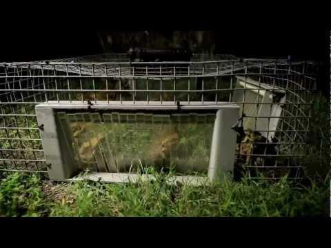 Earthrise - Cane Toads