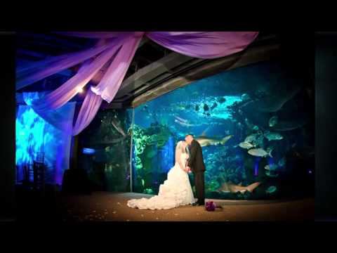 Aquarium Wedding Tampa Mp4