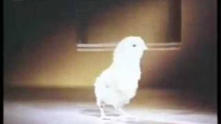 Язык животных ( 4 из 7 )