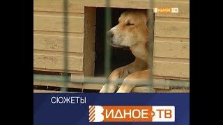 """""""В ответе"""" - такие красивые и особенные собаки породы хаски"""