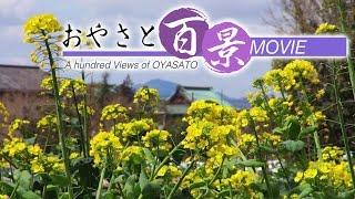 第21回「春の野の花」