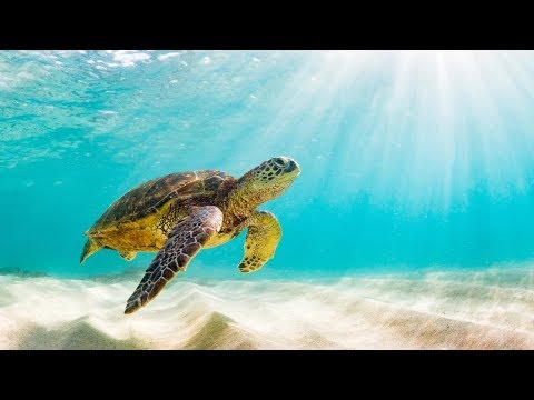The Beauty of Nature - Turtles & Tortoises