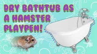 Bathtub As A HAMSTER PLAYPEN! Thumbnail