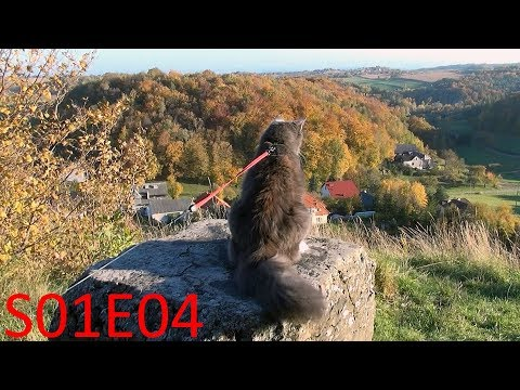 Hiking with Benek The Norwegian Forest Cat - at the edge [S01E04]