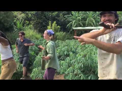 HIP Agriculture Internship - Hawaii 2016