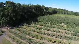 Sun High Orchards - Randolph, NJ 07869 - GlideBy JJ