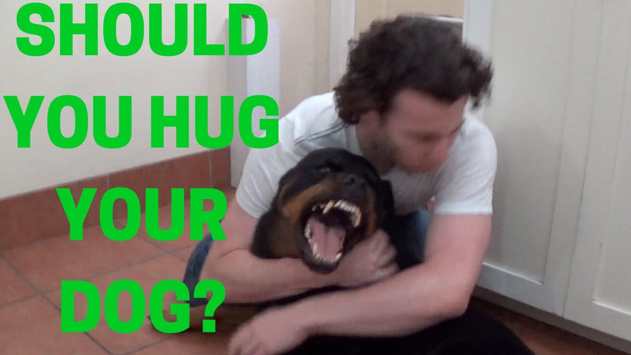 3 Ways to Hug a Dog foto
