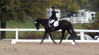 Carleigh Fedorka & Called To Serve Retired Racehorse Project October 2015 Dressage