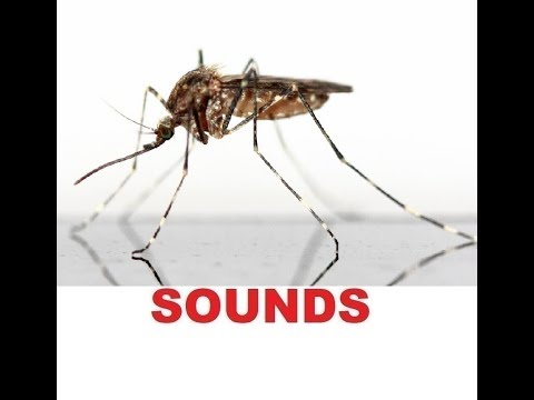Mosquito Sound Effects All Sounds
