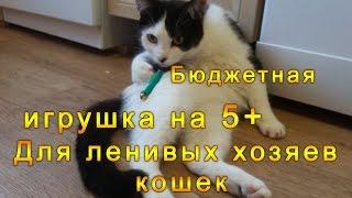 Лазерная указка и кот - Игрушка для ленивых кошатников на 5+, Отзыв и игры