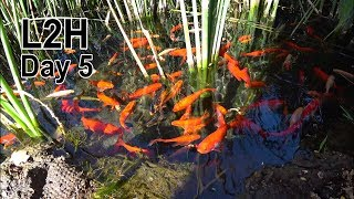 L2H - Day 5, Fish Pond in the Desert, China Garden, Darwin Canyon