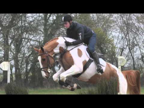 Gavin Reilly Irish Sport Horses