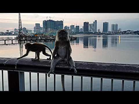 Macaques at Woodlands Waterfront Promenade-Singapore (July 2017)