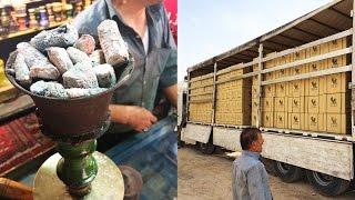 Кальяны в Иране, культура курения и быт. Обзор кальяна Pars