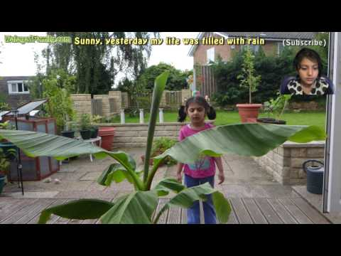 Sunny, yesterday my life was filled with rain - Anika Cover