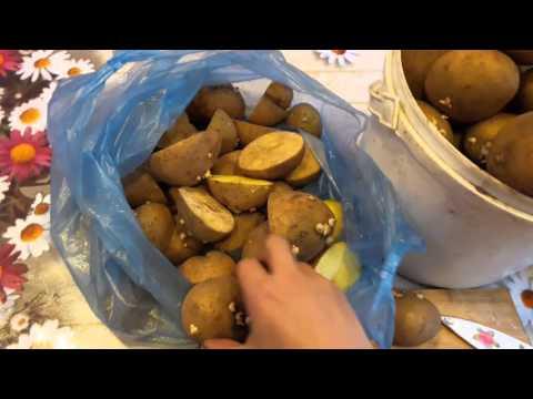 Картофель на семена   новый способ увеличит урожай в 2 раза