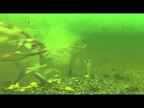 Зимняя рыбалка на Маныче. Вид столов у дна. Часть первая. Юрий Философ. 2015 год.