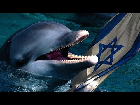 Is Israel Using Dolphins to Spy on Hamas?