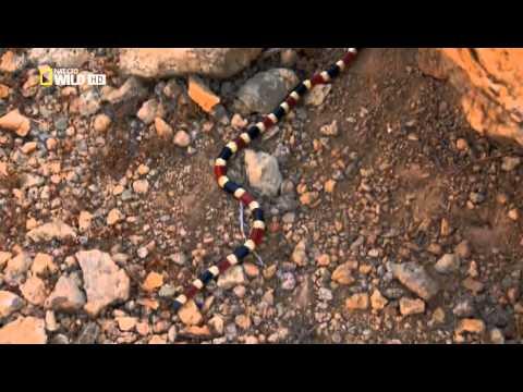 Samie opasnie zmei v mire 2010 XviD HDTVRip ExKinoRay