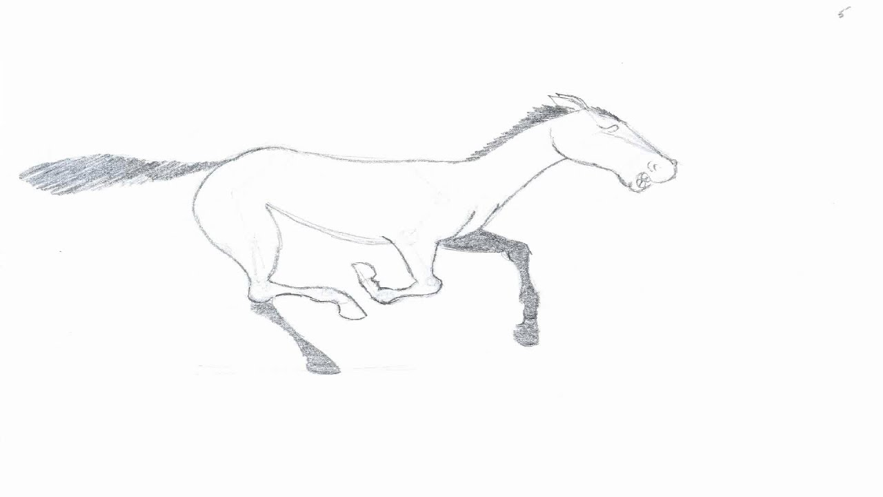 Flash CS5 animation: horse running - YouTube for Animation Horse Running  45hul