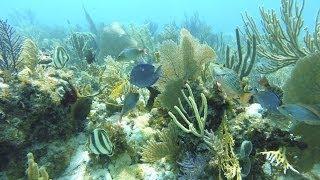 Diving in Florida Keys Islamorada May 2014