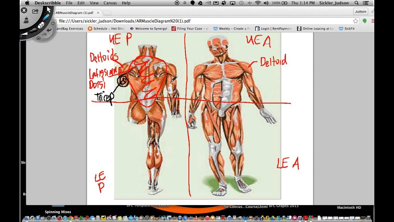 Anatomical Region and Muscle Diagram Worksheet Screencast YouTube – Muscle Diagram Worksheet