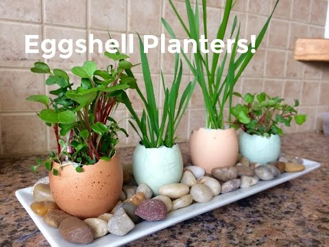 Eggshell Planters, Gardening with Kids!