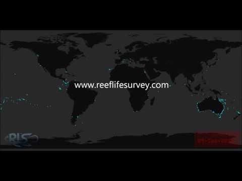Worldwide Marine Surveys