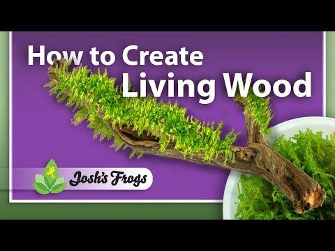 DIY: How to Create Living Wood in an Aquarium