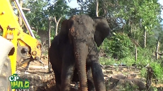 This elephant rescued by wildlife officers !