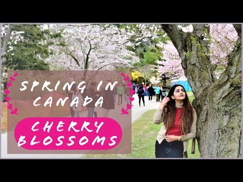 Spring In Canada | Cherry Blossoms | Toronto