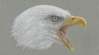 Special Fourth of July Bald Eagle Drawing!