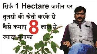 तुलसी की खेती से कैसे कमाए 8 लाख /वर्ष  How to do Basil cultivation and earn 8 lac /year (Hindi)
