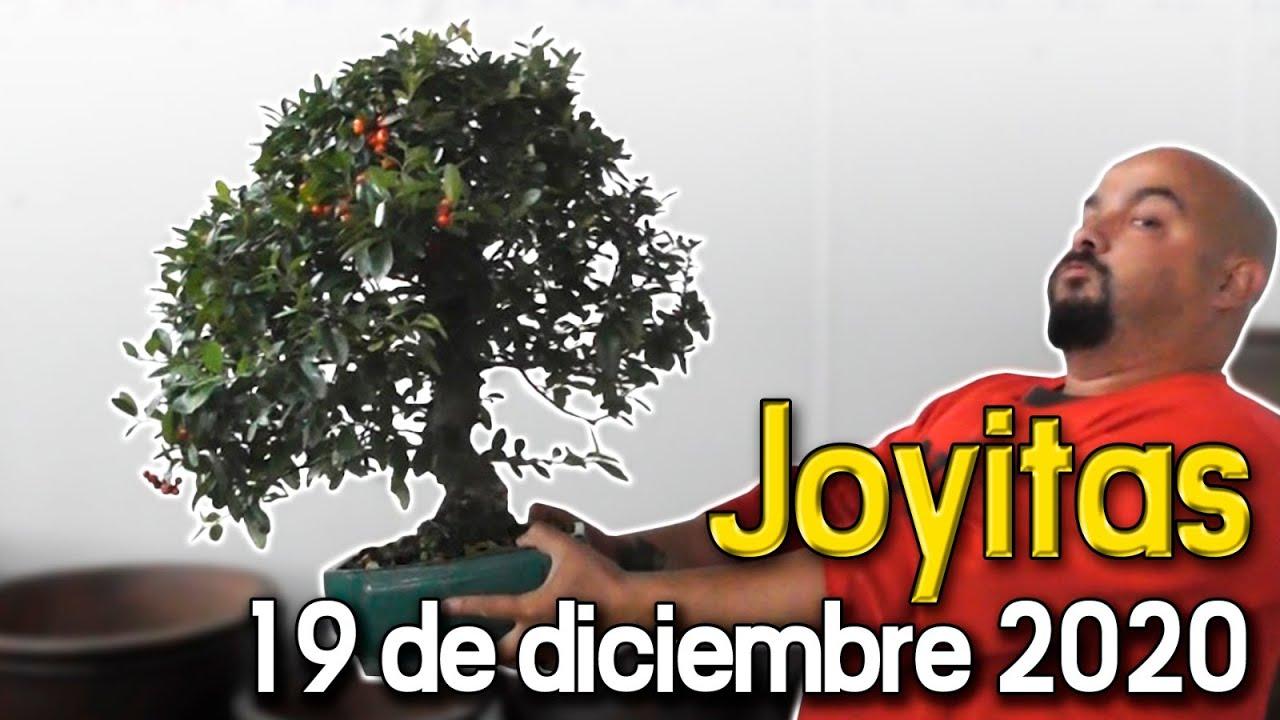 Joyitas 19 De Diciembre De 2020 Youtube