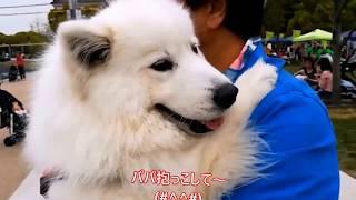SmiledogFesta TEN -SHIBA ~2018春~にいったよ(*^^)v ワンちゃんのた...