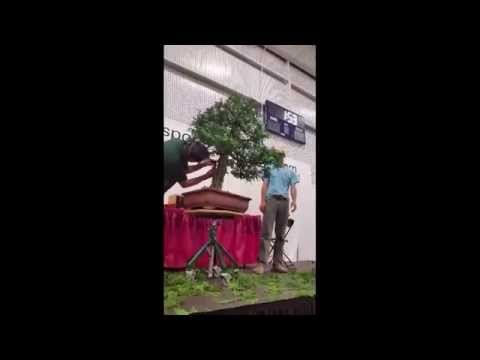 Peter Warren Demonstration - 2014 National Bonsai Exhibition