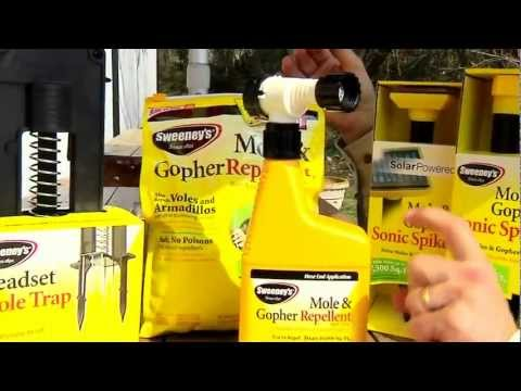 Get Rid Of Moles Gophers With Sweeneys Nal Of Weapons