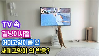 TV 속 길냥이시절 어미고양이를 본 새끼고양이 반응, The reaction of a baby cat to a mother cat on TV