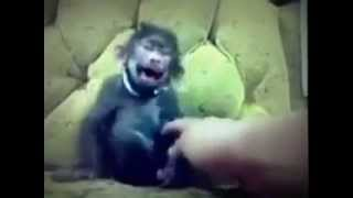 Hey Pope! Leave My Little Baby Baboons Monkey Alone!