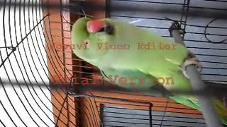 doorbell voice by parrot.flv