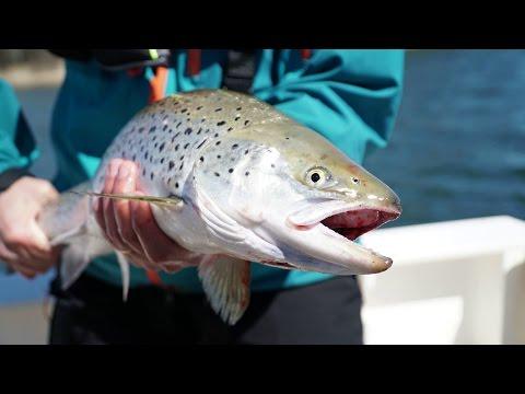 Episode 10 - Sea trout  fishing in Stockholm archipelago (havsöring)