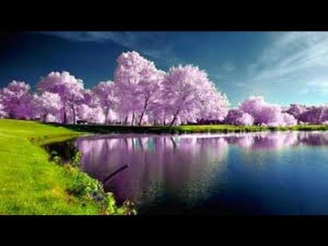 Musica rilassante per meditazione profonda o per for Immagini sfondo desktop primavera